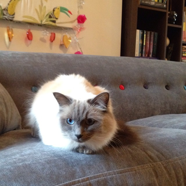 DFS Orbit sofa with cat