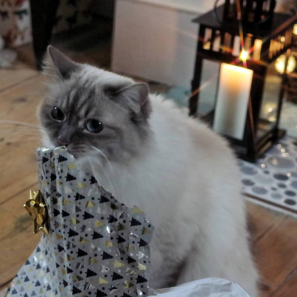 Cat with Christmas wrapping