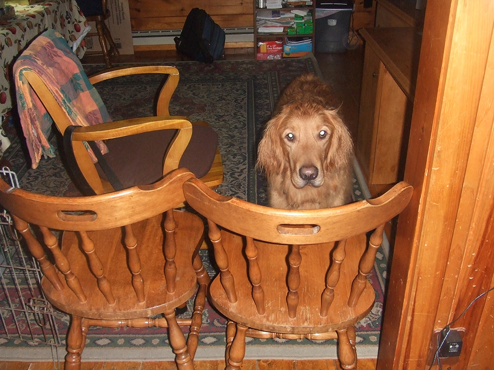 Toby-the-Dog-Halloween-2007.jpg