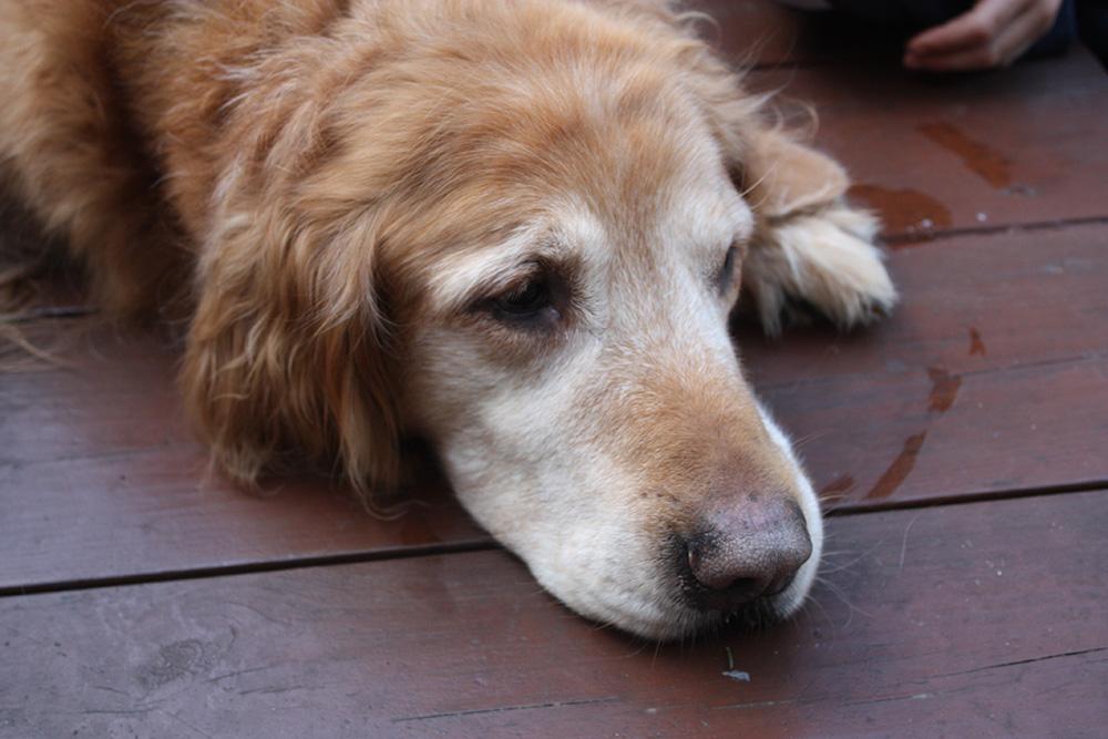 Toby-the-Dog.jpg
