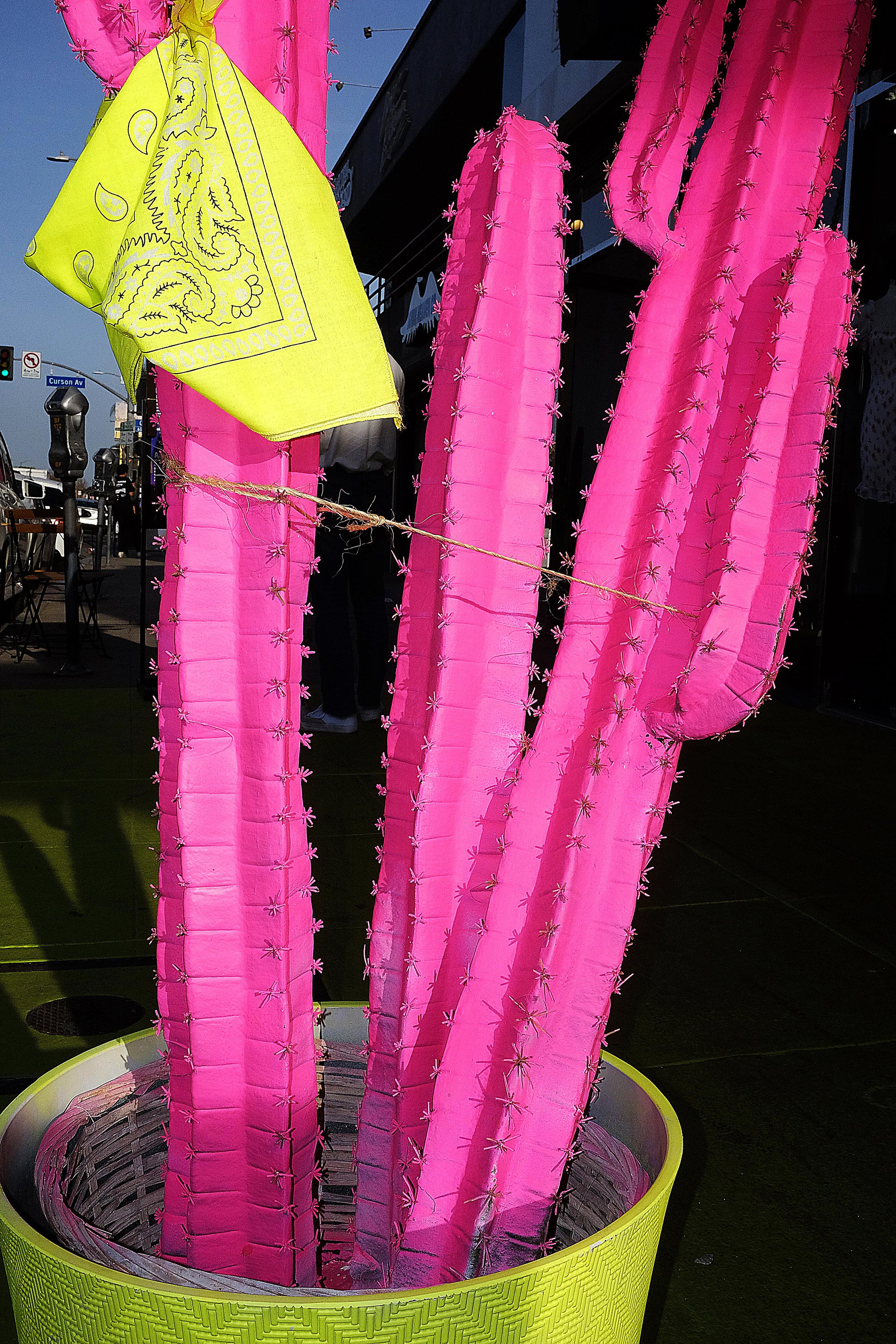 Cactus 1.jpg
