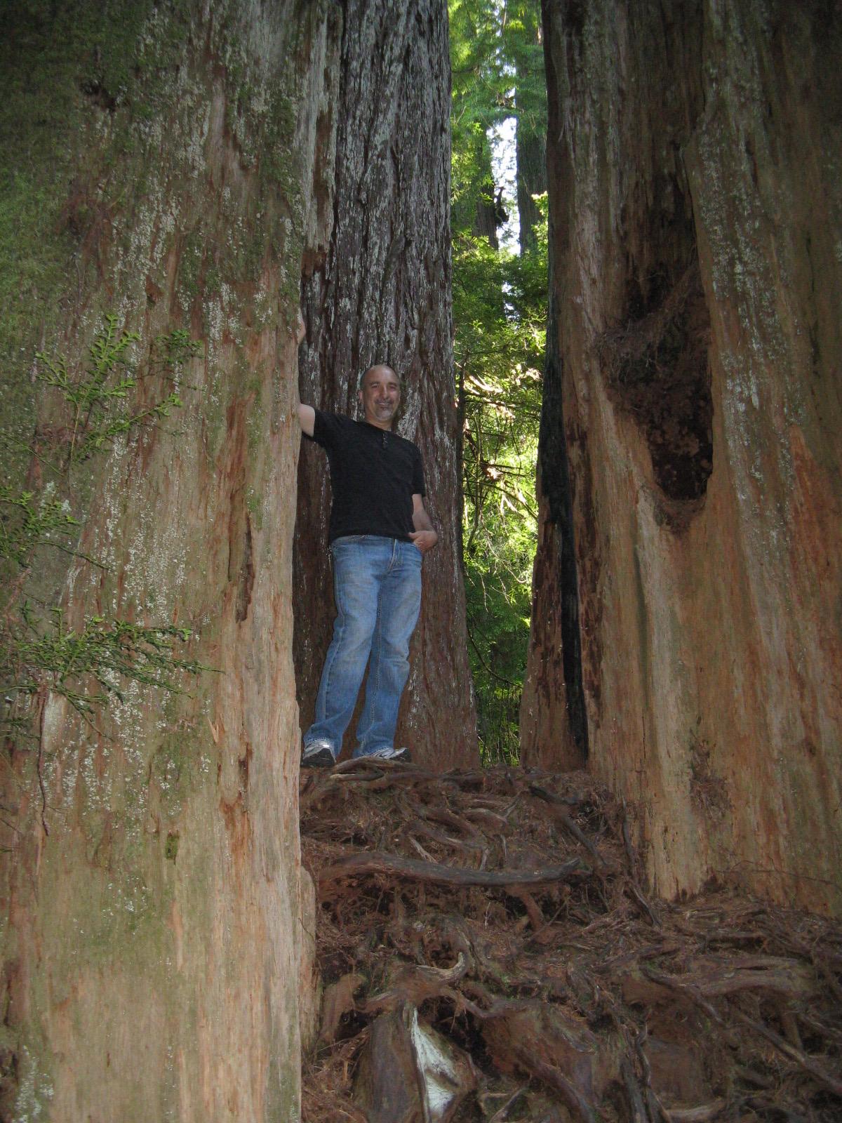 Jim Redwoods 2.jpg