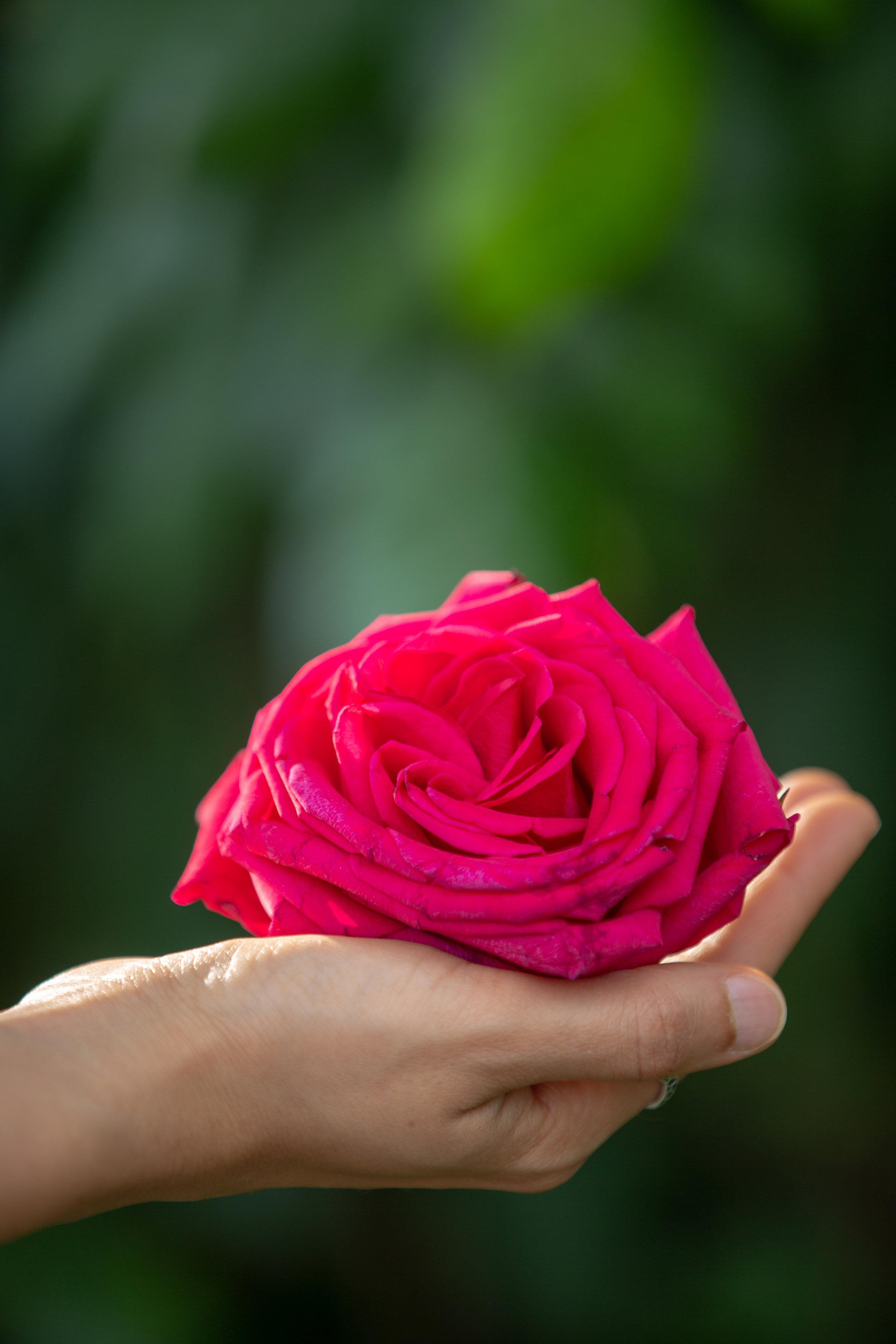 Geeti Shirazi Mahajan Counseling Yoga Rose in Palm of Hand.jpg