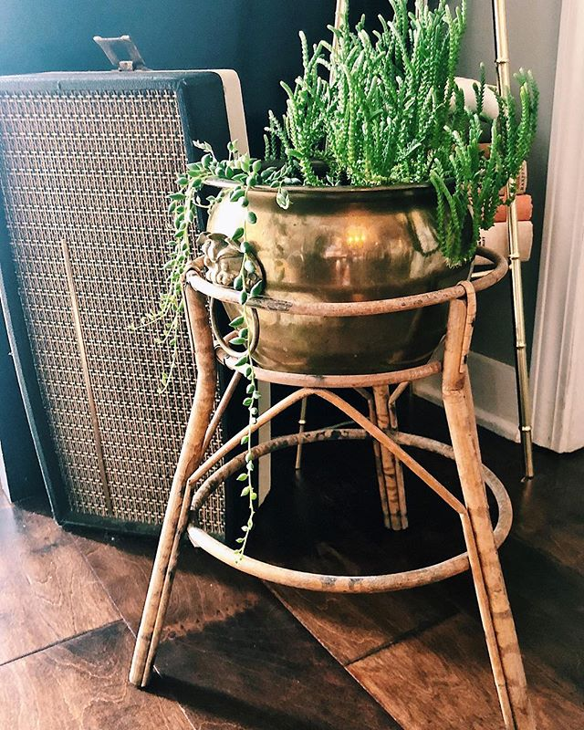 P R € T T Y • P L A N T • S T A N D       check out this gorgeous bamboo plant stand for those pretty spilling plants 🌱 | get it in the shop (link in bio) . . . . . #planters #plantlady #succulents #stringofpearls #brass #brassisback #brassyandsassy #allthebrass #hollywoodregency #vintage #vintageshop #shopvintage #goldobsession #plants #vintagedecor #design #decor #vintagehome #tresorcru #betterthannew #nashville #midcentury #uniquevintage #decorinspo #homegoods #midcenturymodern #decor #gold #goldongold #eclectic