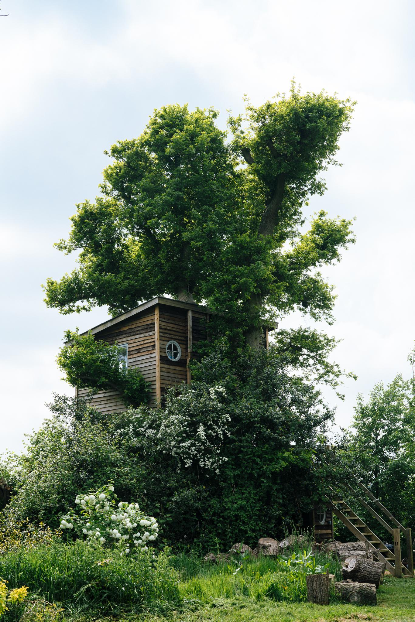 treehouse (45 of 21).jpg