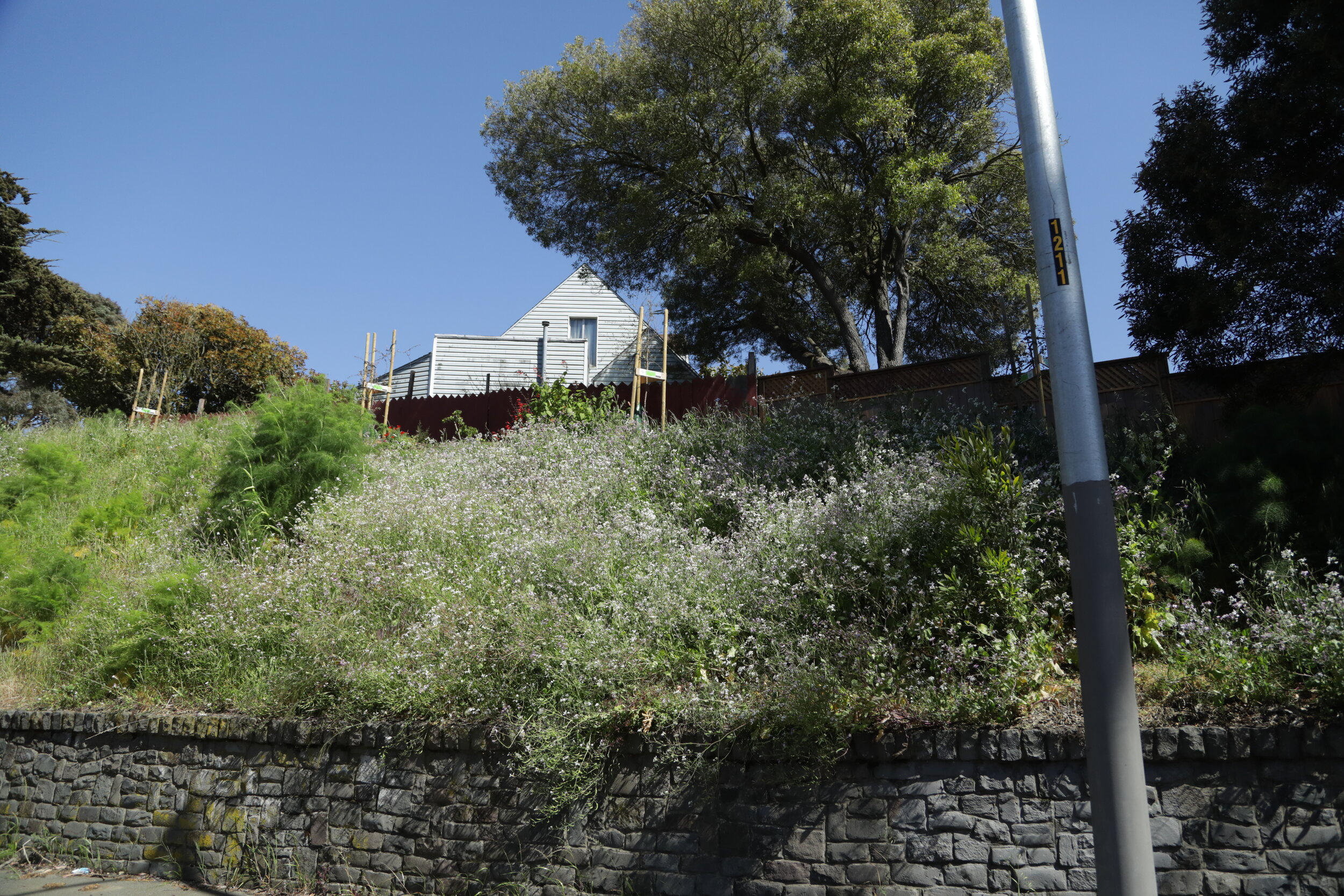 Wide_Slope_Overgrown_House_2.JPG