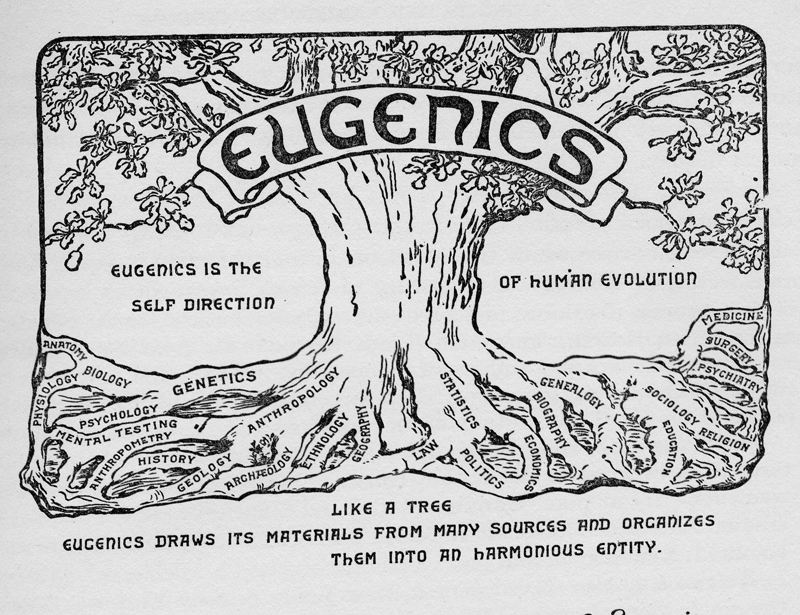 """Eugenics Tree, 1921. displayed at University of Missouri International Eugenics Congresses  https://library.missouri.edu/exhibits/eugenics/congresses.htm    Image description: a tree that reads """"eugenics"""" on a banner at the top. The roots all have different disciplines written on them, from left to right: anatomy, physiology, biology, psychology, genetics, mental testing, anthropometry, history, geology, anthropology, archaeology, ethnology, geography, law, politics, statistics, economics, biography, genealogy, education, religion, sociology, psychiatry, surgery, and medicine. to the left of the tree text reads """"eugenics is the self direction"""" and on the right """"of human evolution"""". Beneath the tree text reads """"like a tree eugenics draws its materials from many sources and organizes them into an harmonious entity."""""""