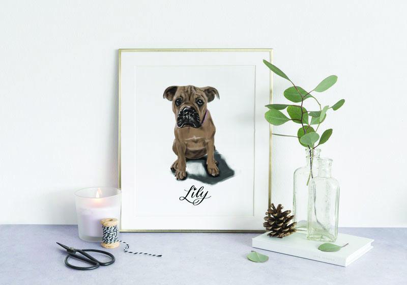 pet-portraits-dog-lily.jpg