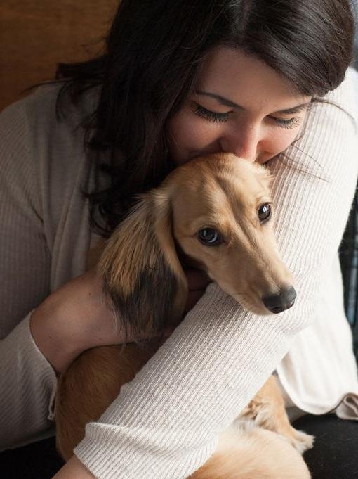 Longhaired Mini Dachshund puppy  Photo Credit:  Megan Butchard Photography
