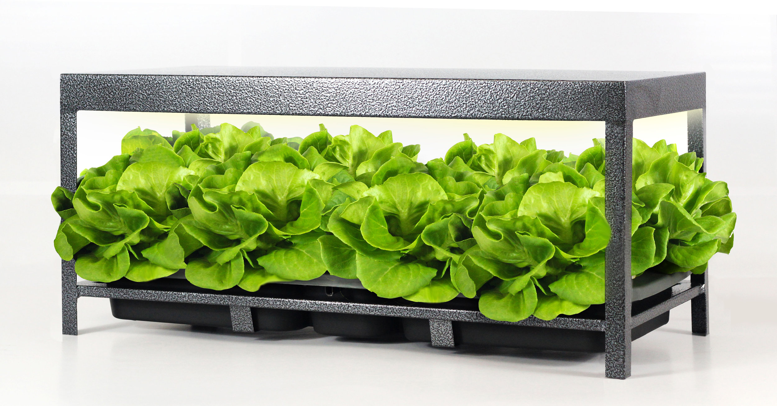 20170420 - lettuce & rack.jpg
