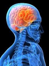 xhuman-brain.jpg.pagespeed.ic.JM14iAL8lN.jpg