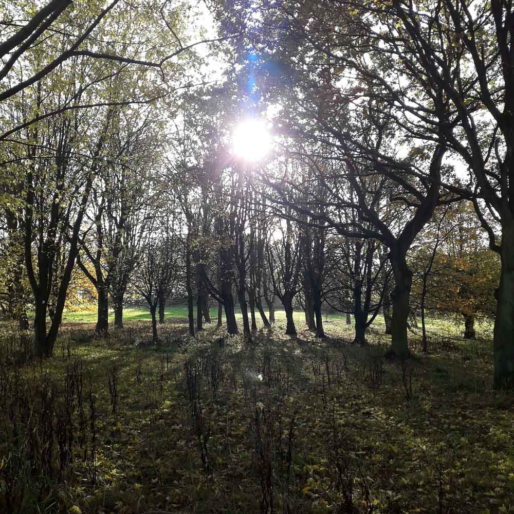 arboretum-inspiration-filtered-sunlight.jpg
