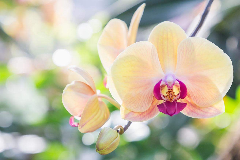 Orchidee .jpg