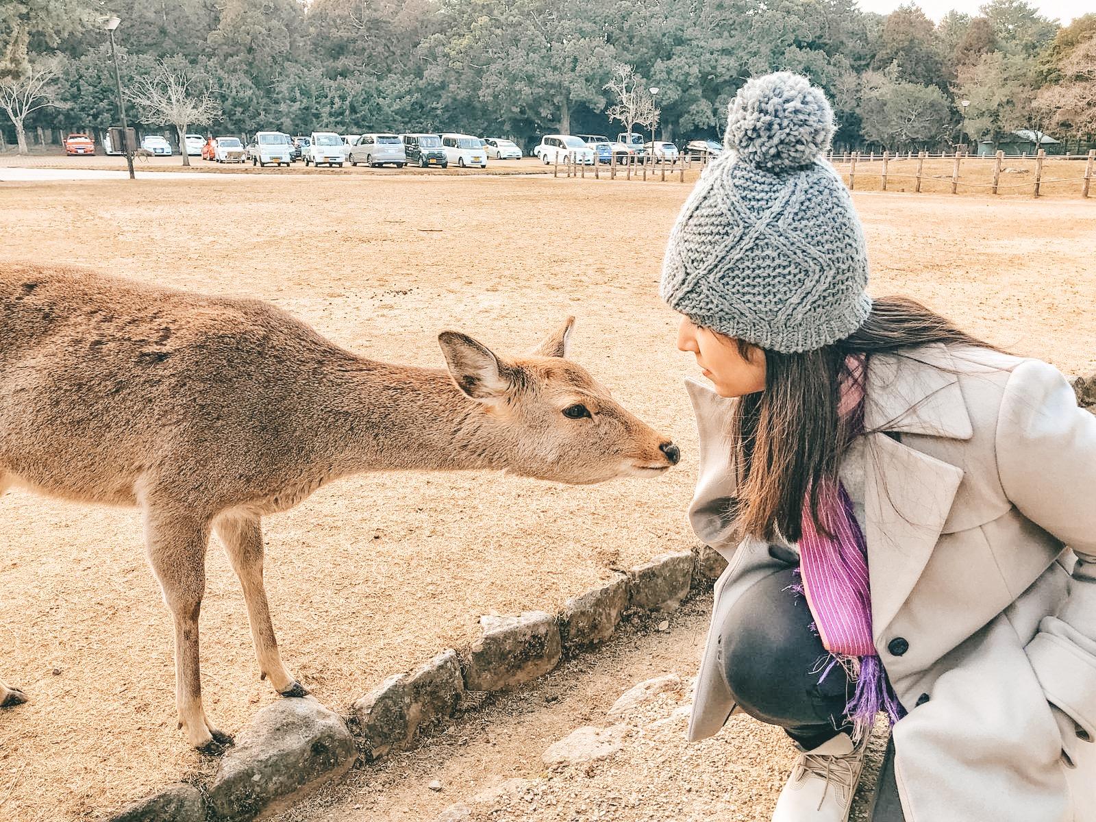 Feeding the deer in Nara - Kyoto, Japan