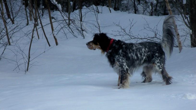 Snow Buddy 228081.jpg