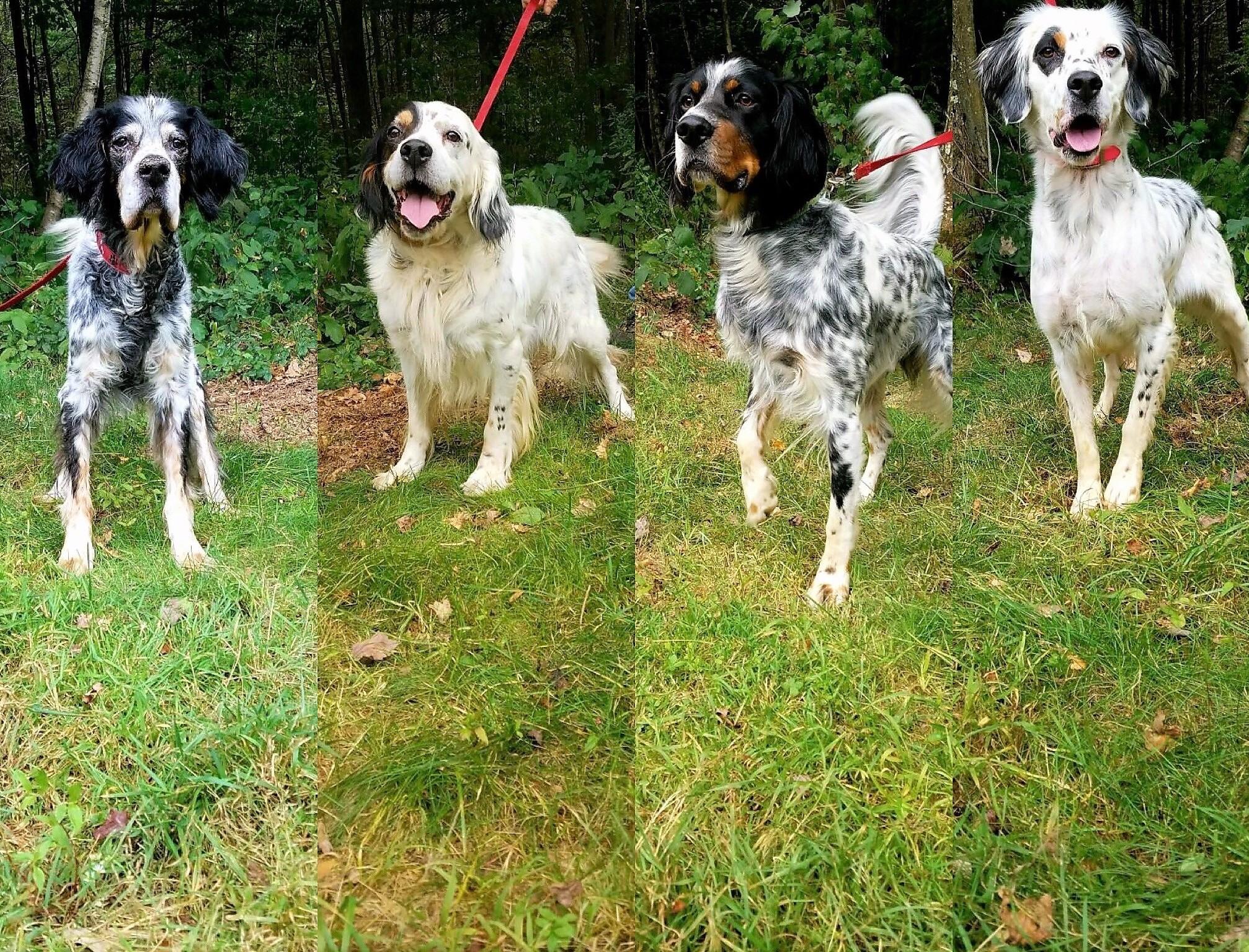 Four Generations - Buddy-Roy-Atticus-Phoebe