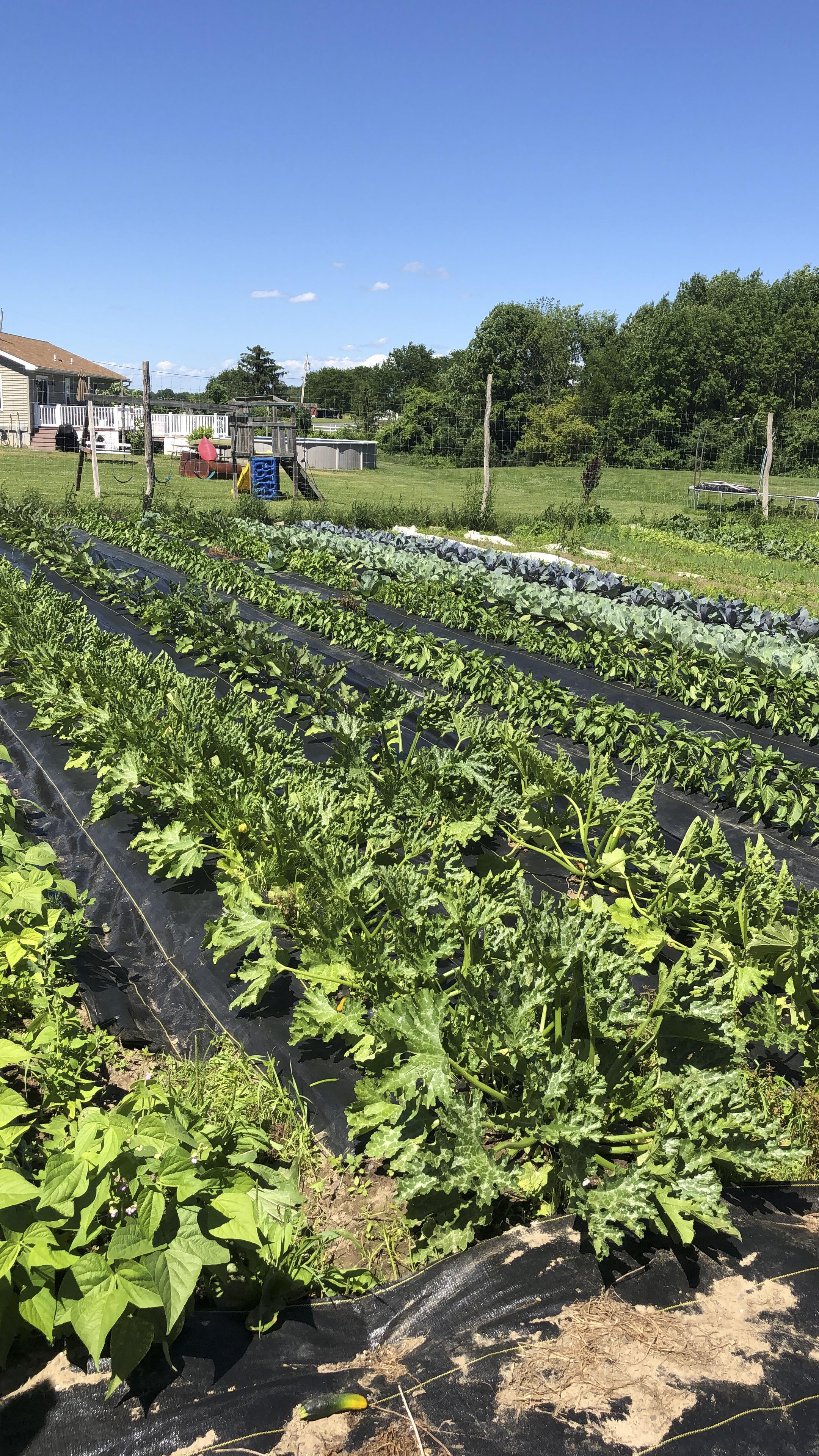 kale-growing-at-heneghans-farm.jpg
