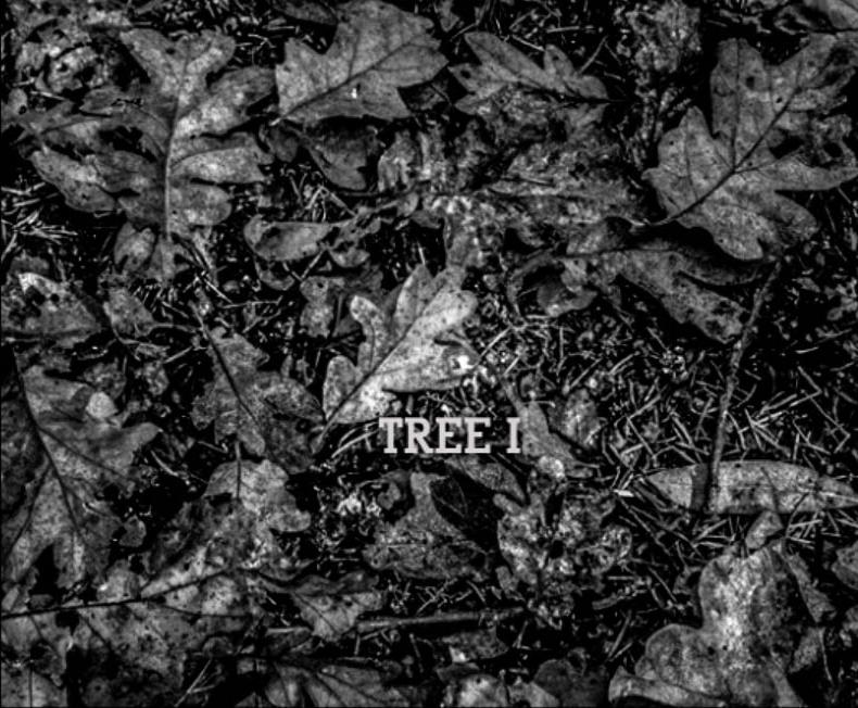 TREE I.jpg