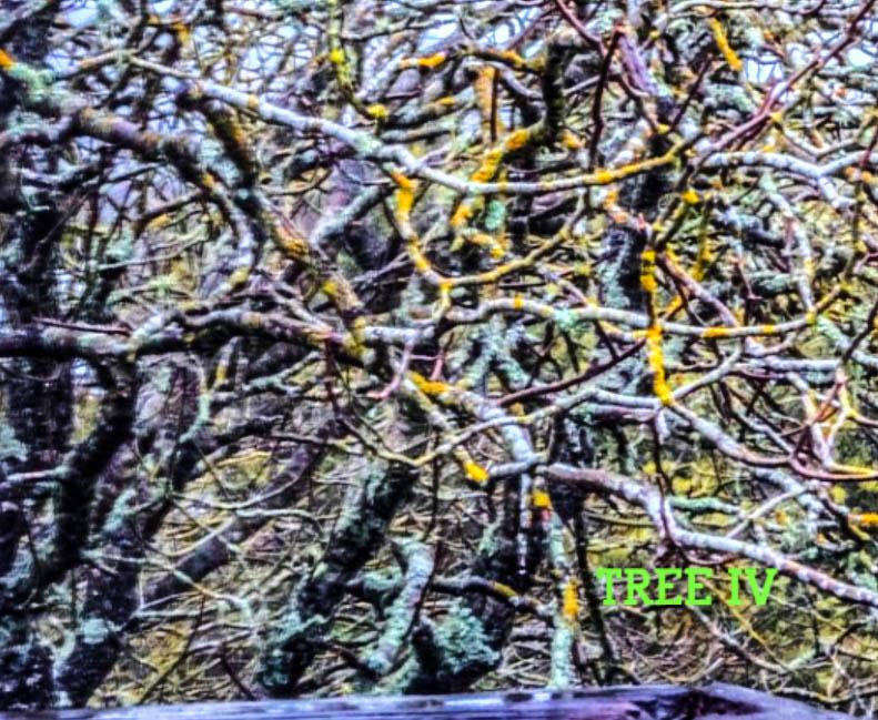 TREE IV.jpg
