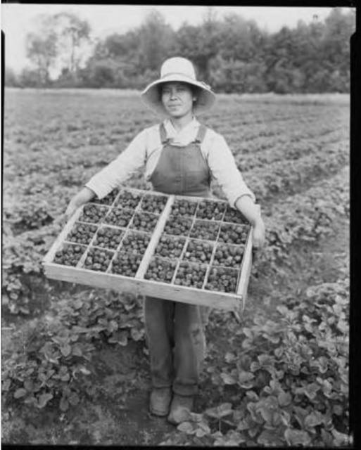 Strawberry Picker.jpg