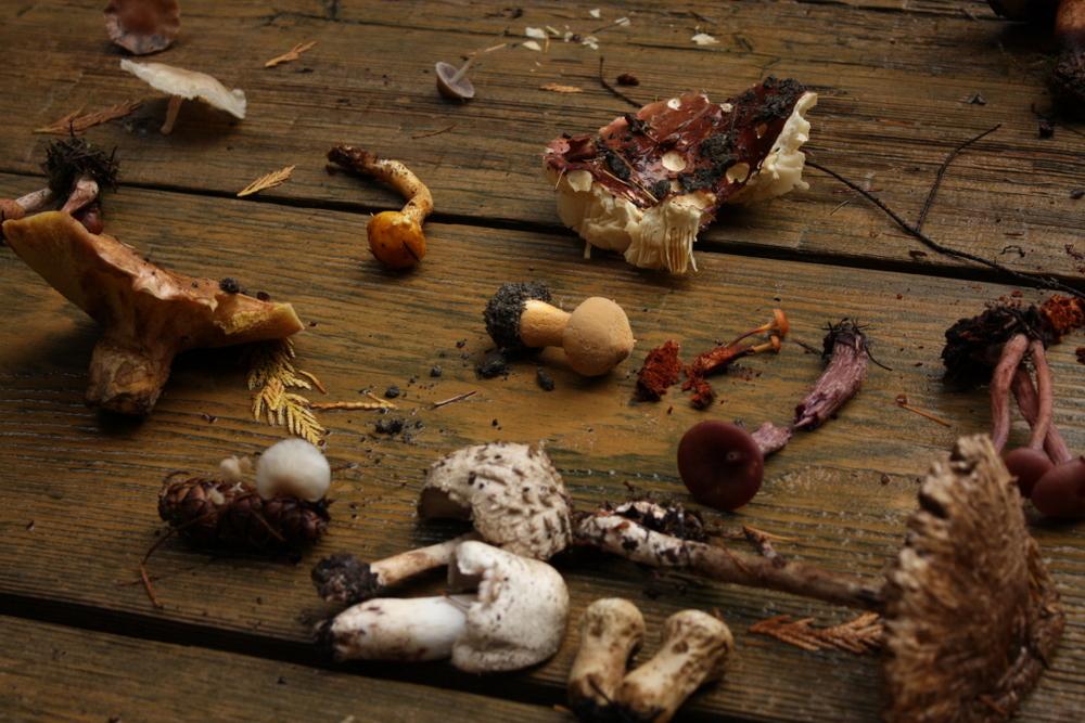 mushroom-walk-at-bridle-trails.jpeg
