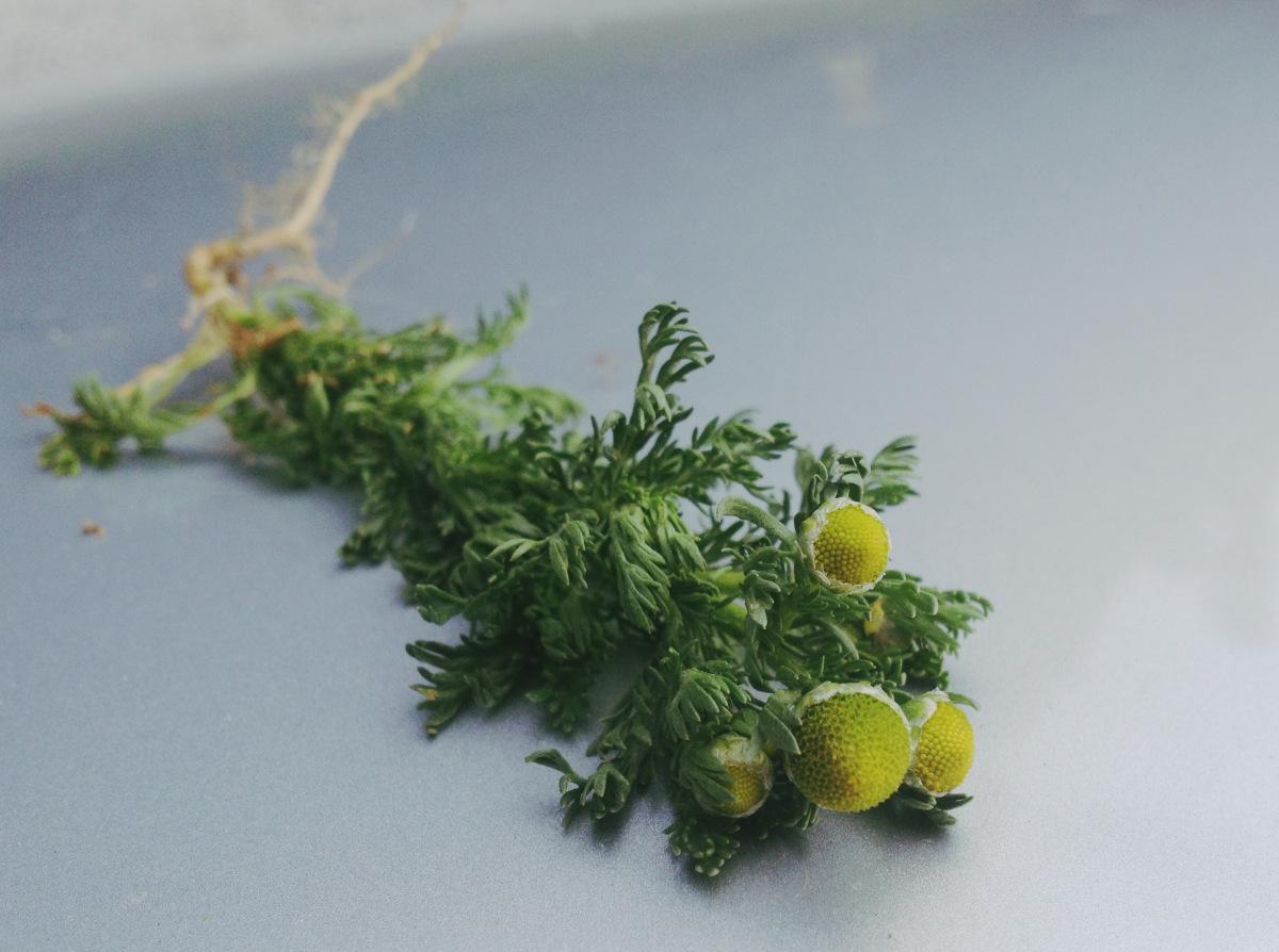 9c-pineapple-weed.jpeg