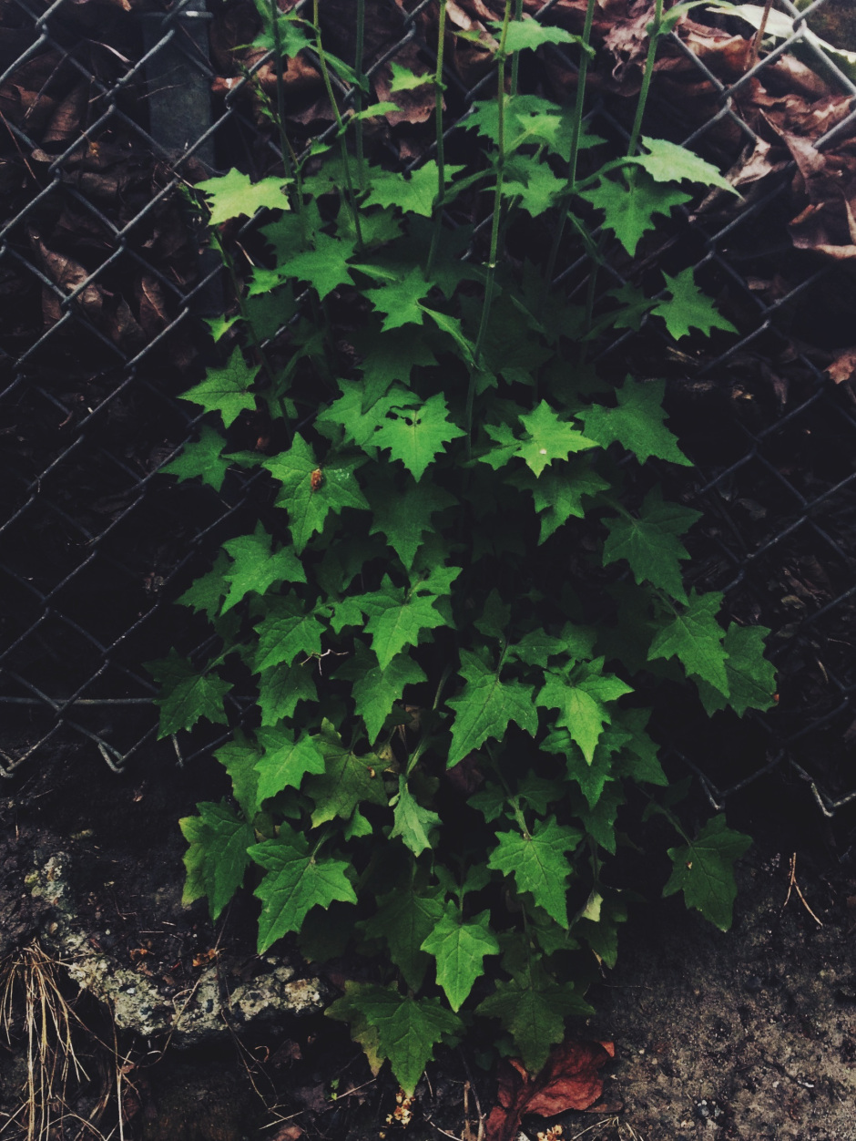 9b-wall-lettuce.jpeg