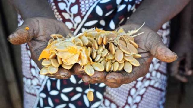 Photo Credit: Slow Food Biodiversity
