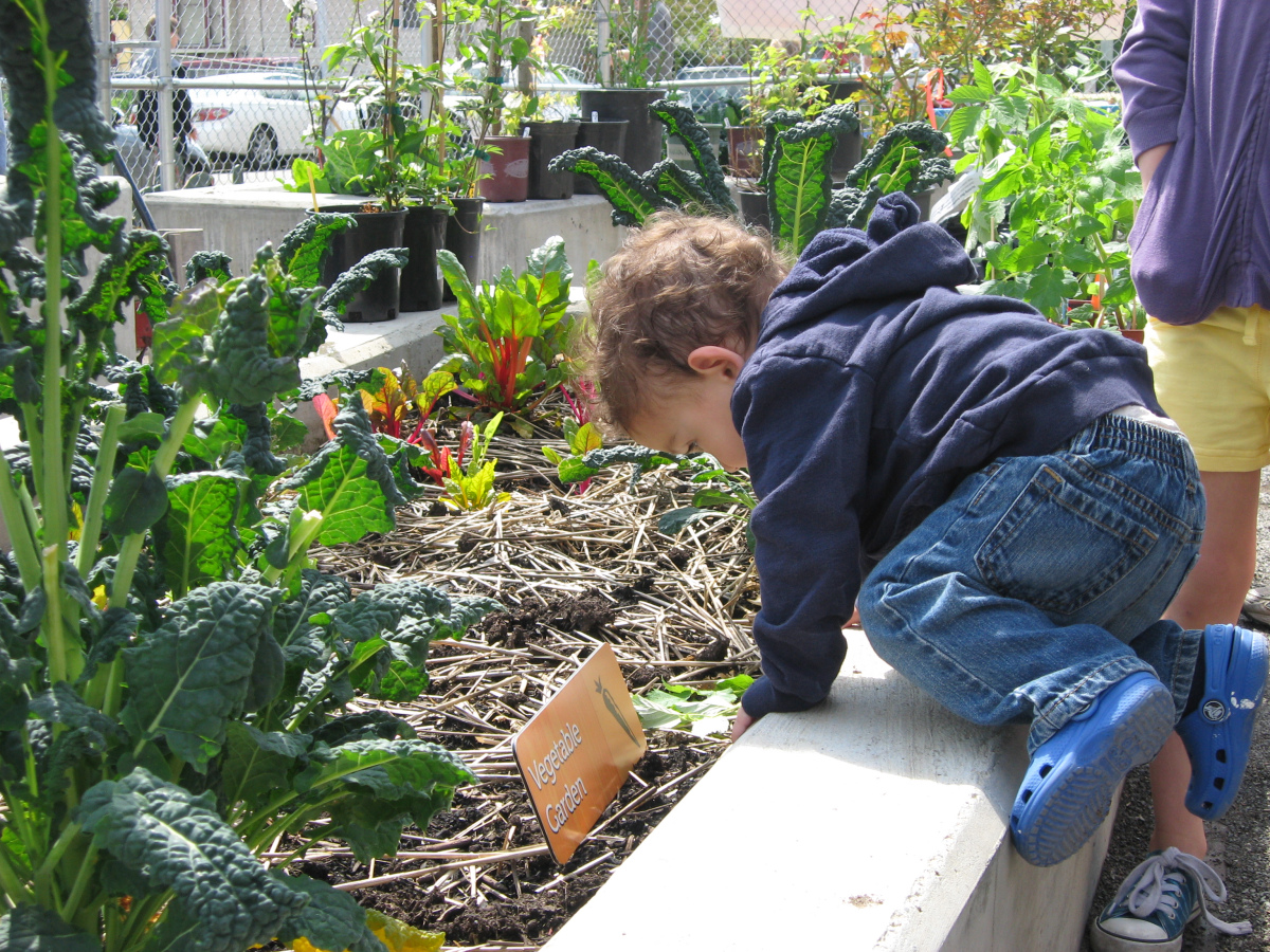 A toddler visits the Orca K-8 school garden in South Seattle