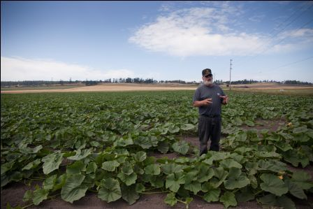 Dale Sherman in his field of Sugar Hubbard squash. Photo: Lara Ferroni