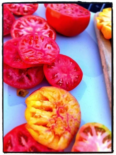 Some gorgeous heirloom tomatoes fresh from the U-Distric Farmers Market - testing their Brix levels as part of Jon Rowley's quest for the 10-Brix tomato.