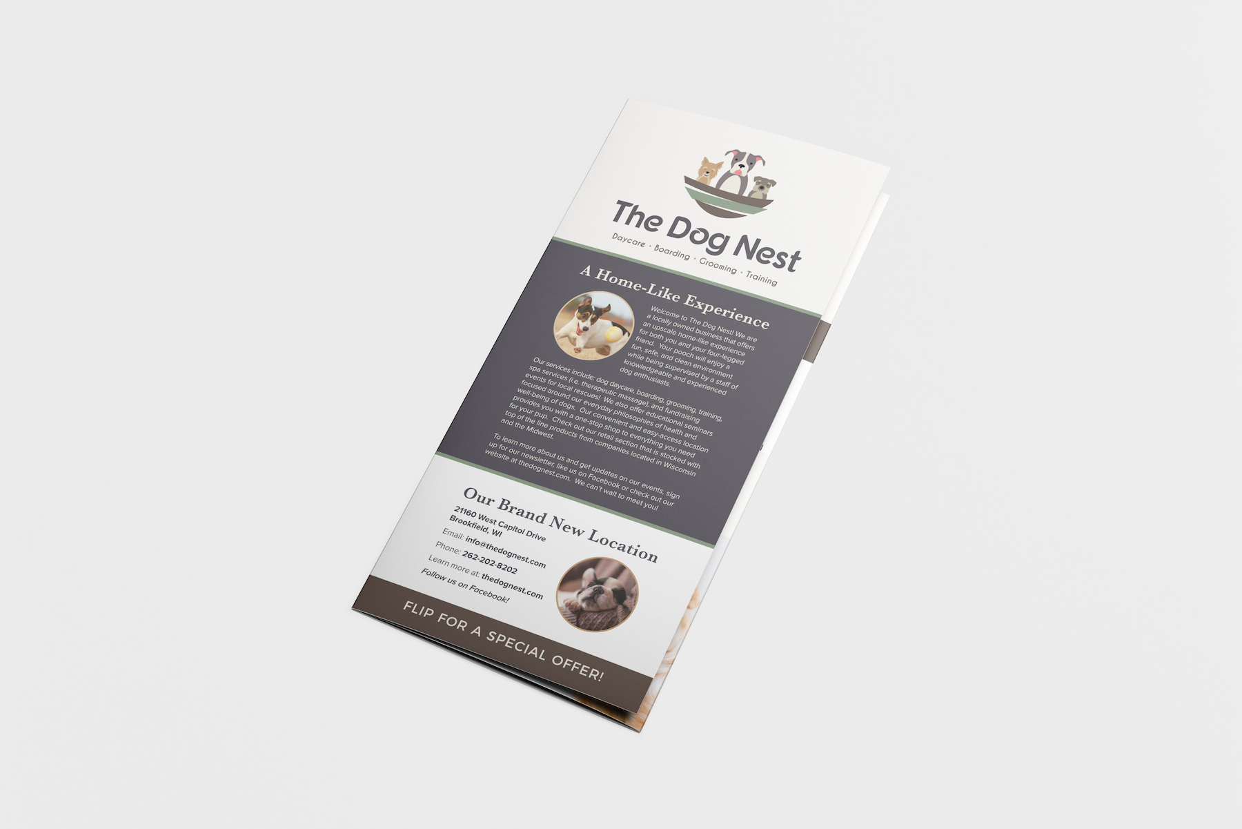 Golden-Antler-Graphic-Design-Milwaukee-Web-Branding-Marketing-Wisconsin-The-Dog-Nest-Brochure-Printing