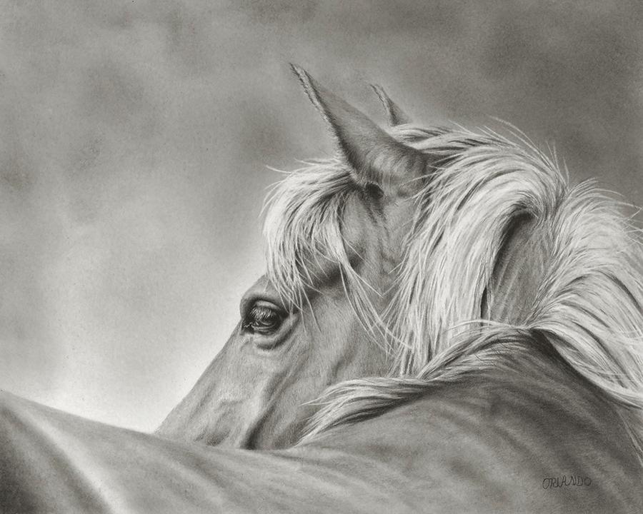 Orlando- One Horse A 8x10 copy.jpg