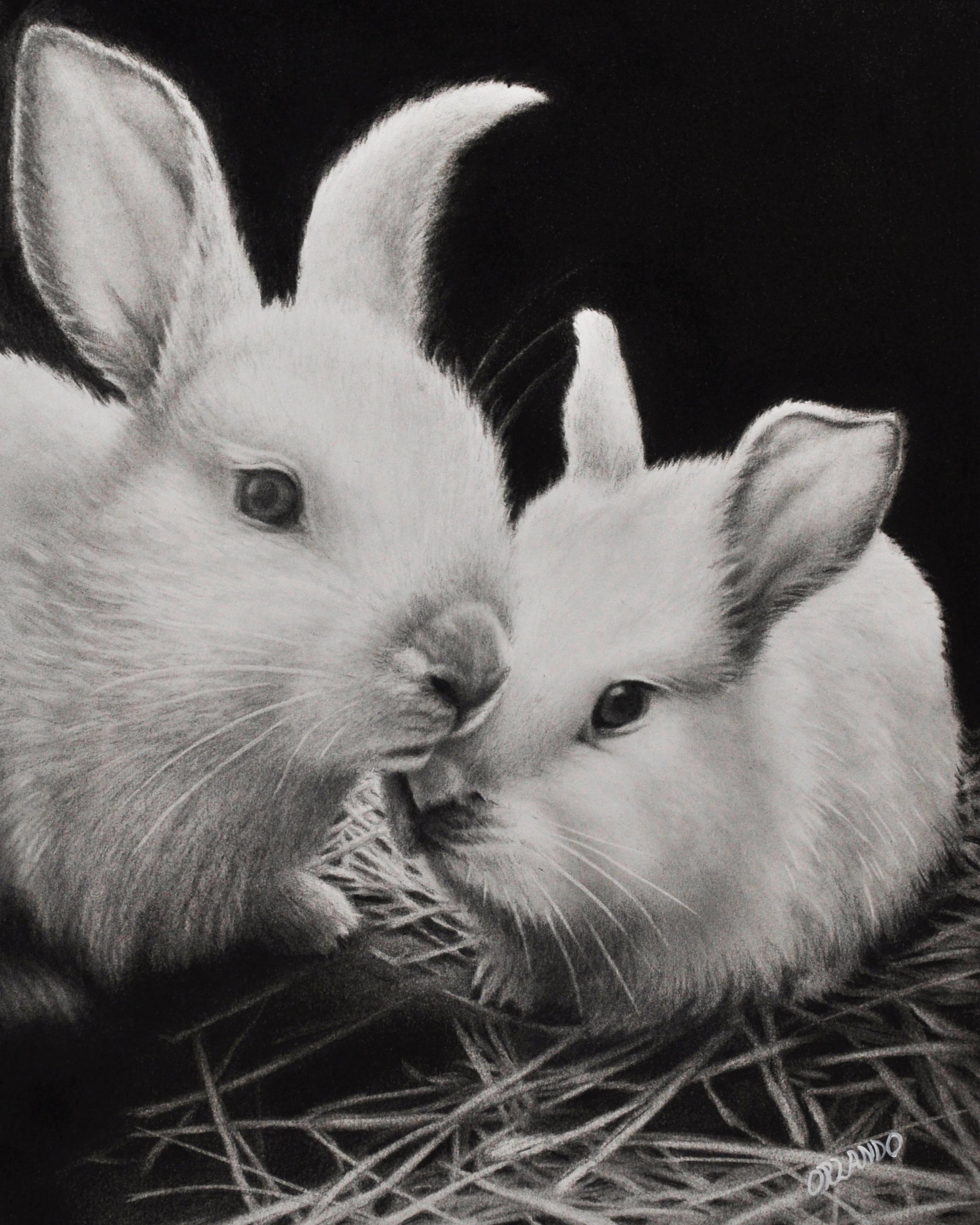 Crystal Orlando #art #hyperrealisticdrawing #realisticdrawing #pencildrawing #animalart #Texasastist #baby bunnies.jpg