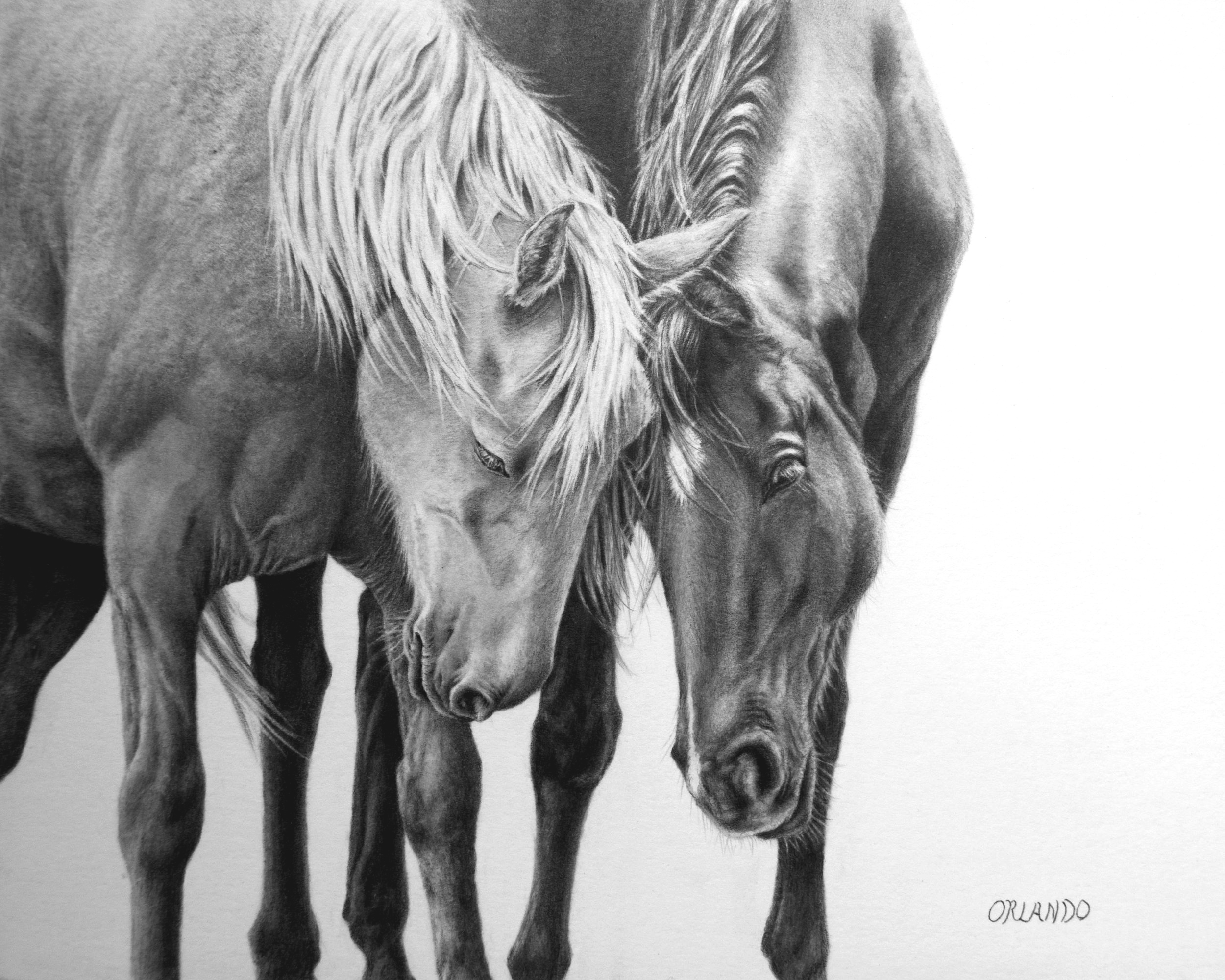 Crystal Orlando #BestFriends #horse #pencildrawing #texasartist #JHWY #realisticpencildrawing .jpg