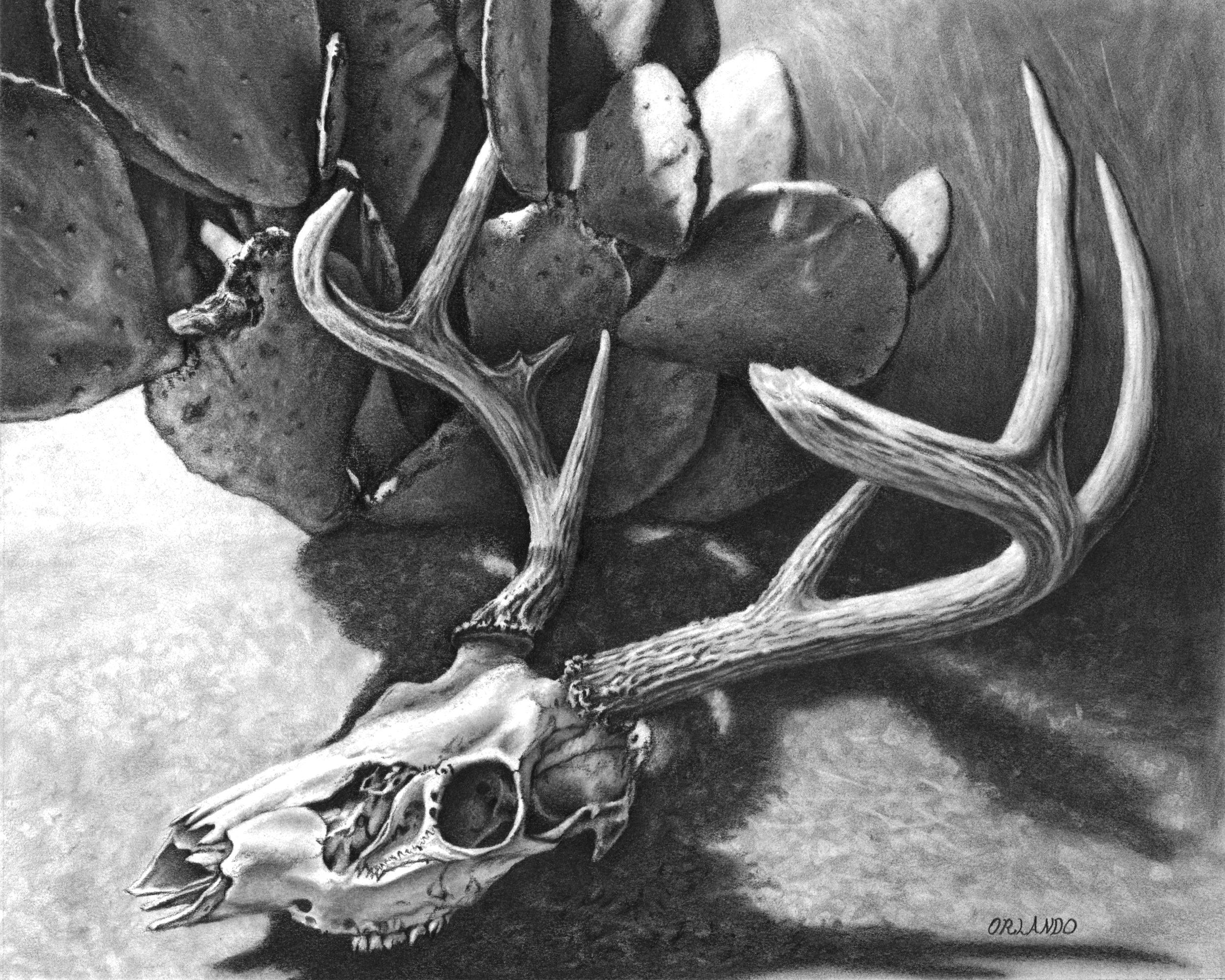 Orlando Skull.jpg