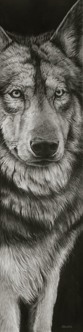 Orlando- Wolf II 48x12 ss.jpg