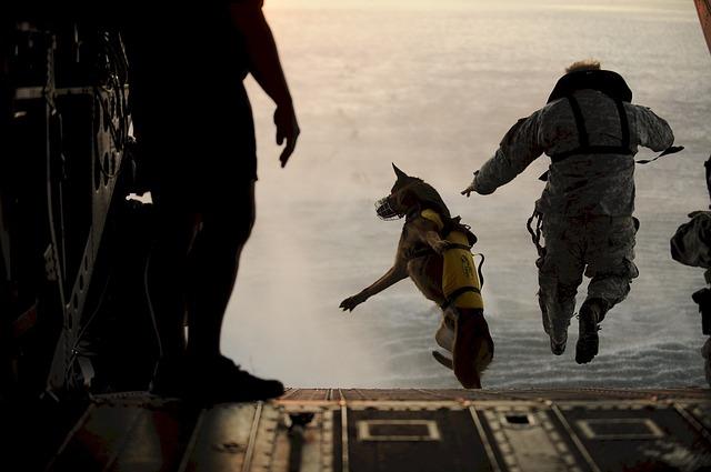 Military dog skydiving.jpg