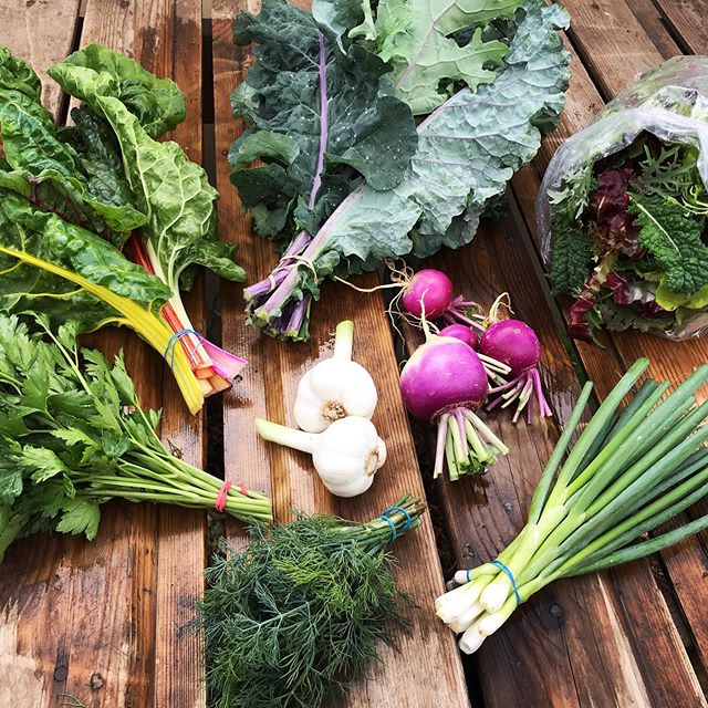 Short Stock CSA week 1! Kale, chard, greens, parsley, dill, turnips, fresh garlic, and scallions . . . #knowyourfarmer #yum #eatright #spreadjoy #createcommunity