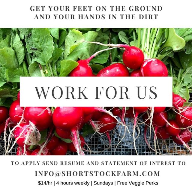 Short Stock Farm is hiring! Want to flex your food growing skills? Want to learn about soil health and holistic farm management? Or maybe you just wanna get down w the plants? Whatever calls you we want to hear from you!