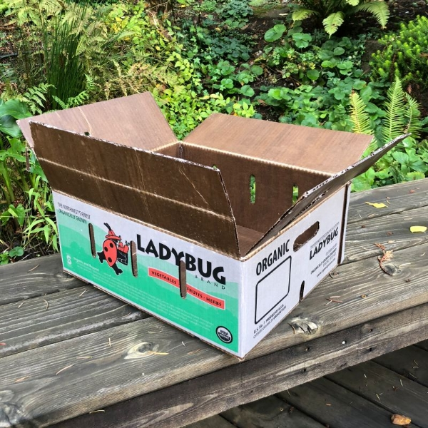 wax box 1-800.jpg