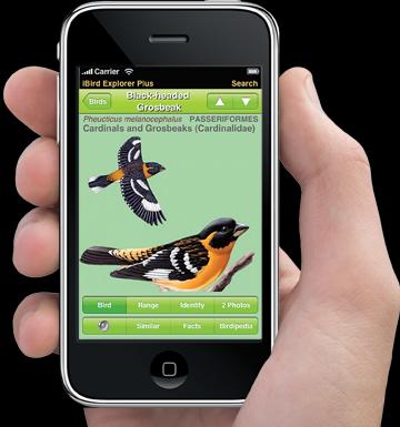 iPhone bird.png