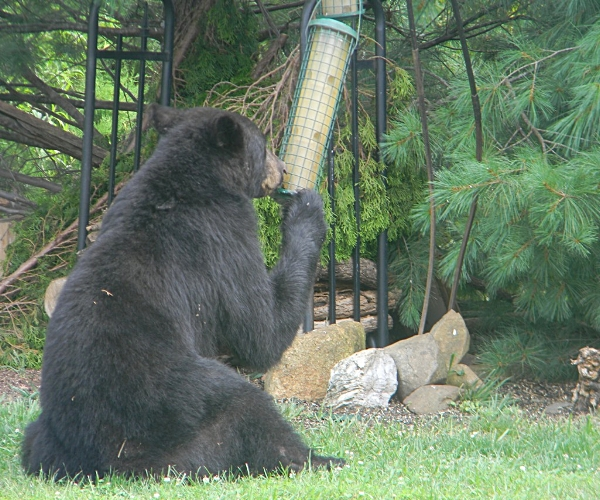 Did we mention  bear  deterrents?