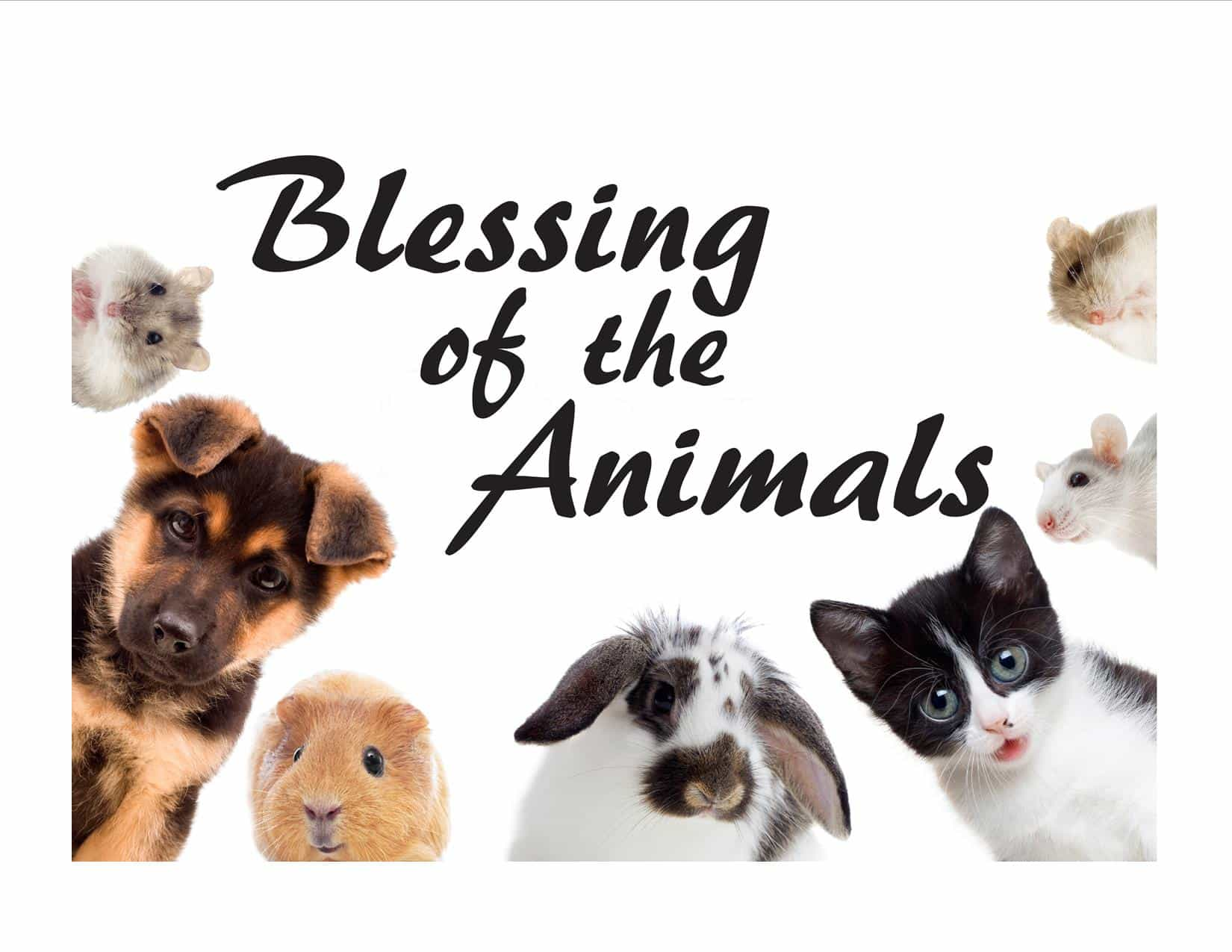 Join us and bring your favorite animals!  Fur, feathers, scales and hooves are all welcome.