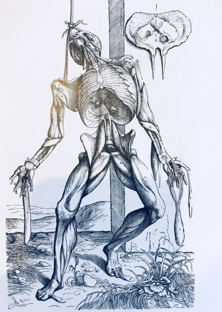 Vesalius shows the fibrous net in the familiar way- as layers of muscles-but the overlying layers of fascial tissue have been removed.