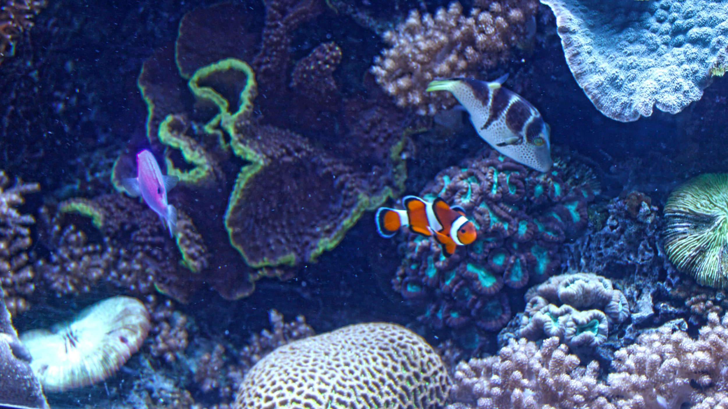 Aquarium_080.jpg