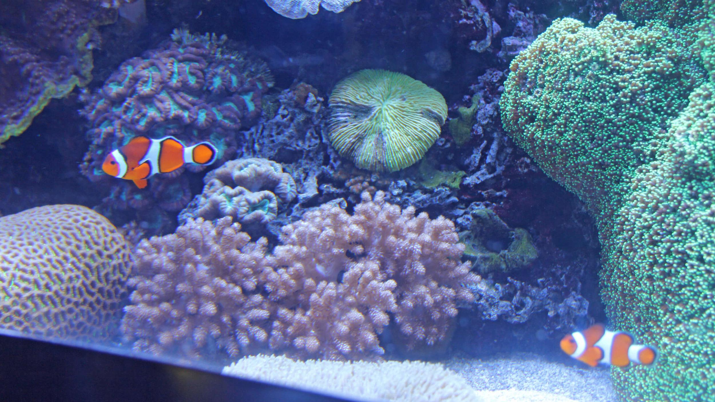 Aquarium_079.jpg