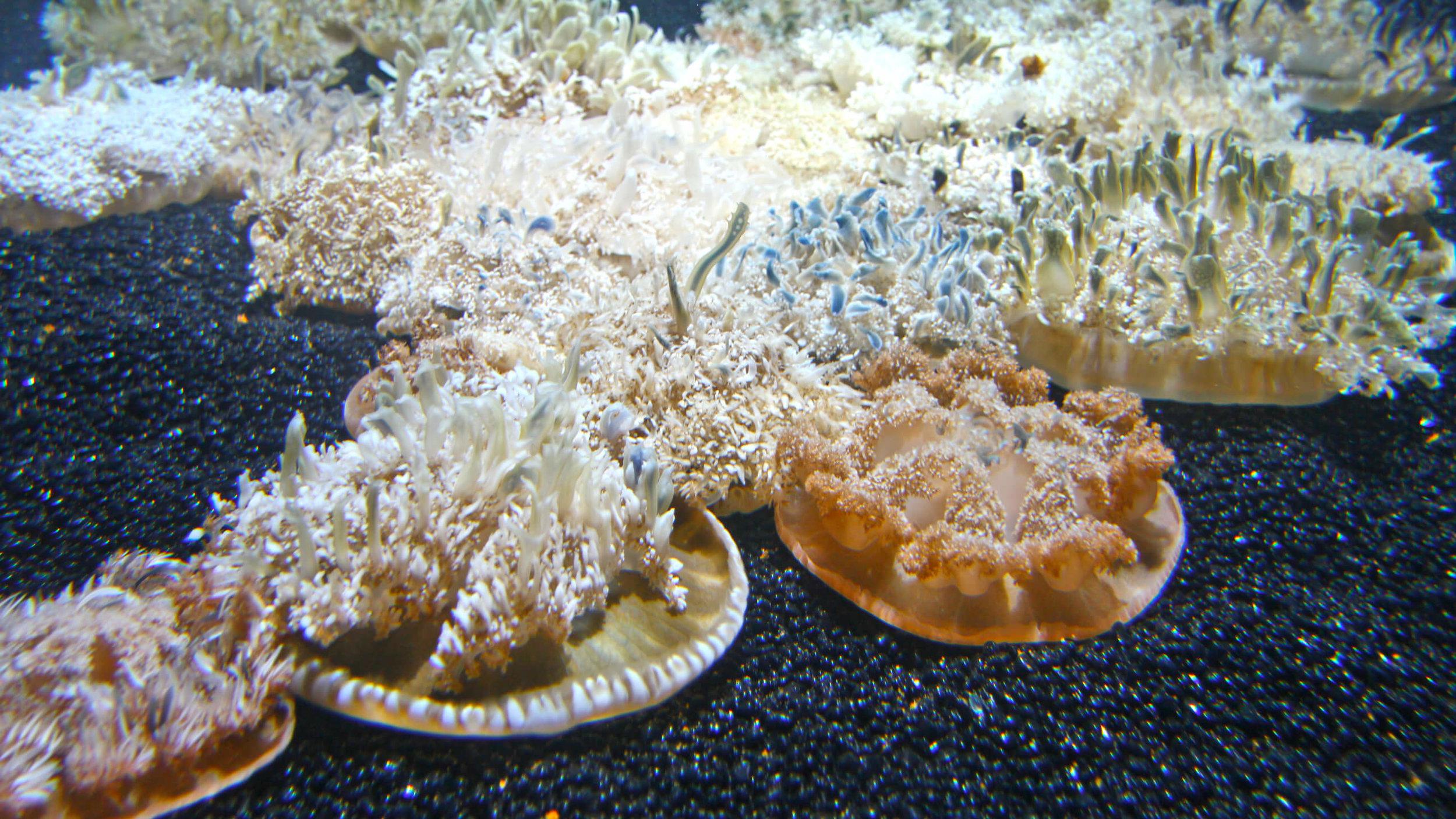Aquarium_045.jpg