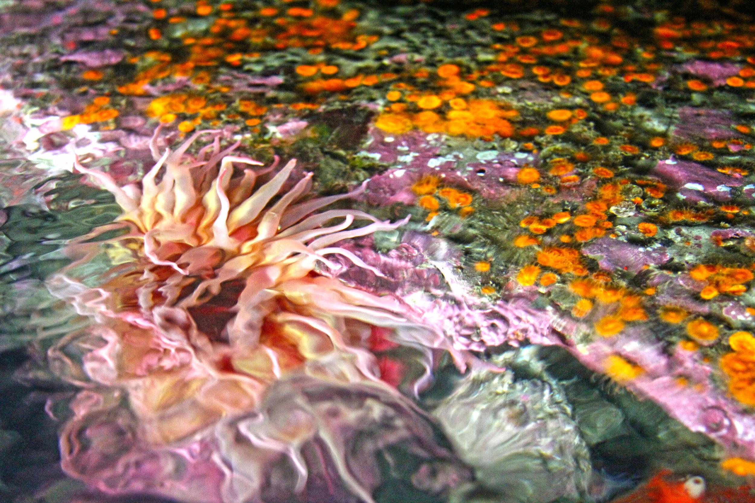 Aquarium_016.jpg