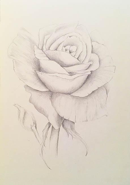 2018-summer-rose-drawing-web.jpg